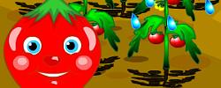Uncover Tomato